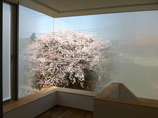 借景の桜満開/吹田の家/大阪府吹田市